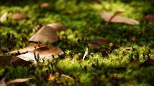 Фотография Крупным планом Листья Мхом Природа
