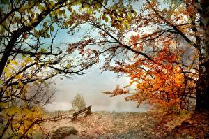 Обои Осень Парк Скамейка Туман Ветка Природа