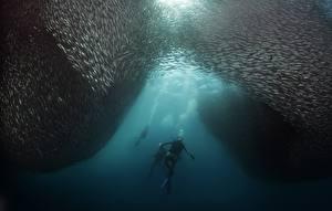 Картинка Дайвинг Подводный мир Рыбы Животные