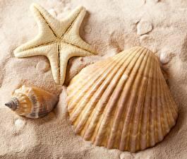 Обои Песок Природа