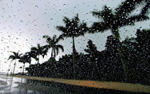Картинки Дождь Пальмы Капли Стекло Природа