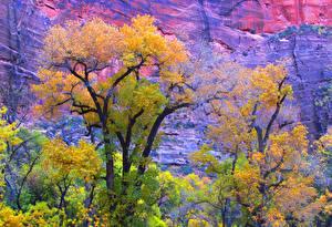 Фото США Осень Парки Зайон национальнай парк Утес Utah