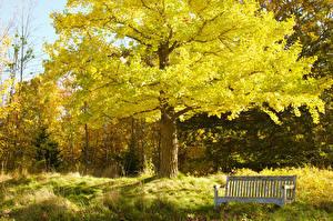 Фото Парки Осенние Скамья Трава Природа