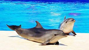 Фото Дельфины Бассейны 2 животное