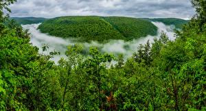 Картинка США Пенсильвания Туман Деревья Grand Canyon of Pennsylvania, Pine Creek Gorge Природа