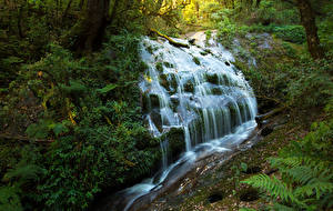 Обои Таиланд Тропики Леса Водопады Chaingmai Природа фото