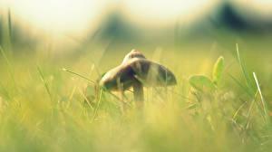 Обои Грибы природа Трава