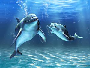 Обои Подводный мир Дельфины Двое животное