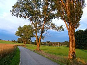 Картинка Чехия Дороги Лето Поля Дерево Kačlehy Природа