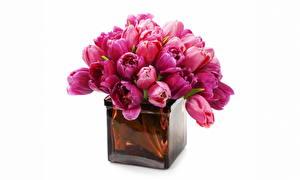 Фотография Тюльпаны Вазе Цветы