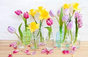 Фото Тюльпаны Нарциссы Лепестки Банка Цветы