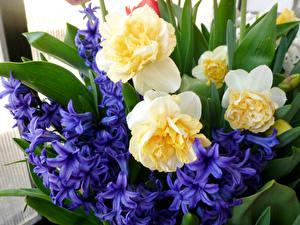 Картинки Букет Гиацинты Нарциссы Цветы