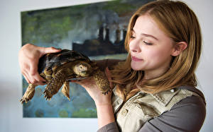 Фотографии Chloe Grace Moretz Черепахи Laggies 2014 Кино Знаменитости Девушки
