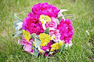 Фотография Букеты Пионы Роза Розовые Трава Цветы