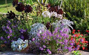 Обои Англия Сады Дельфиниум Петуния Great Dixter Gardens Sussex Природа Цветы