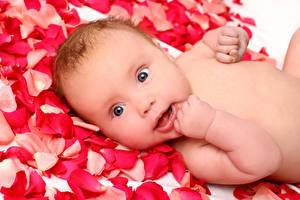 Картинка Глаза Младенец Взгляд Лепестков Ребёнок