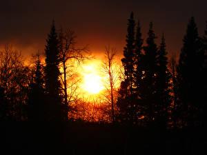Обои Солнце Силуэт Деревья Природа