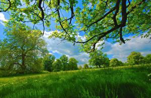 Картинка Лето Траве Деревья Ветвь Зеленых Природа