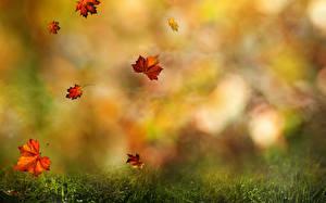 Фотография Осень Листья Трава Природа