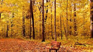 Фотография Парки Осень Скамья Природа