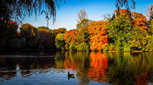 Фото Осень Утка Индия Озеро autumn Природа