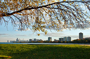 Картинки Штаты Ветвь Чикаго город Мичиган Трава Illinois Города