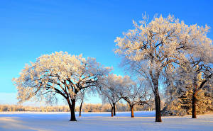 Картинки Парки Зимние Дерево Снеге Природа