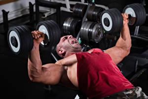 Картинки Мужчины Бодибилдинг Гантели Мышцы Физические упражнения Спорт