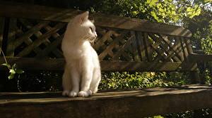 Картинки Кошки Котята Скамья Животные