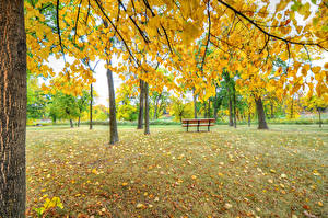 Обои Парки Осенние Скамейка Деревьев Природа