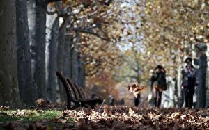 Картинки Осенние Парки Улиц Лист Скамья Города