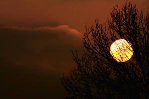 Картинки Рассветы и закаты Силуэт Солнце Ветки Природа