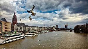 Фотографии Германия Река Корабли Птицы Франкфурт-на-Майне Облака Города