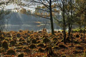 Фотографии Озеро Осенние Трава Природа