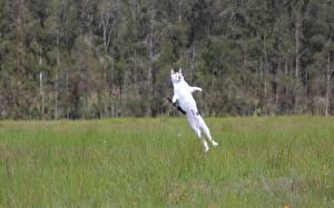 Картинка Кошки Поля В прыжке Rocket Cat животное