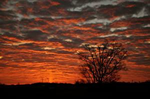 Фотография Рассветы и закаты Силуэт Ветвь Облака Природа