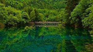 Обои Китай Озеро Мосты Леса Цзючжайгоу парк Sichuan Природа фото