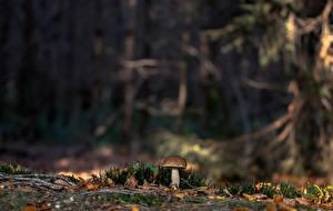 Фотография Грибы природа Леса Мха