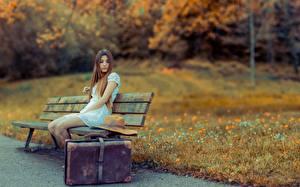 Фотографии Парки Скамья Чемоданы Трава Сидящие Девушки