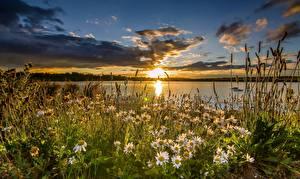 Обои Англия Рассветы и закаты Озеро Ромашки Небо Трава St Aidan's RSPB West Yorkshire Природа Цветы