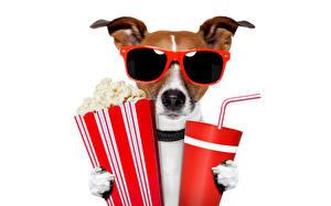 Фотографии Напиток Собаки Джек-рассел-терьер Очках Смешной Животные Юмор