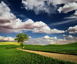 Фотография Весна Дороги Поля Деревья Облака Трава Природа