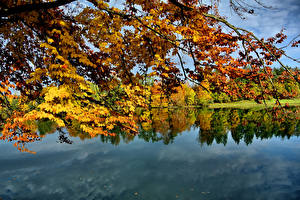 Картинка Озеро Осенние На ветке Природа