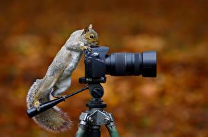 Картинка Белки Фотоаппарат Фотограф Смешные Wild Grey Squirrel Животные