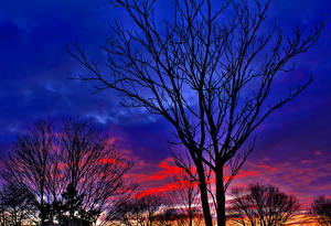 Картинки Деревья Силуэт Ветка Природа