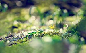 Картинка Вблизи Траве Мха Природа