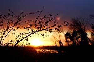 Картинки Рассветы и закаты На ветке Силуэт Природа