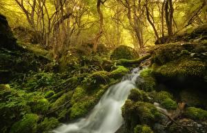 Фотография Леса Камни Водопады Деревья Мох Ручей Природа
