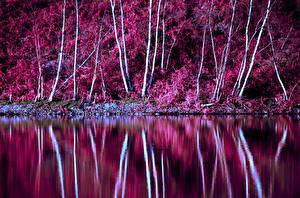 Фотографии Осень Озеро Деревьев Природа
