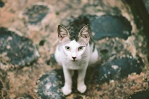 Фотография Кошка Сидящие Животные